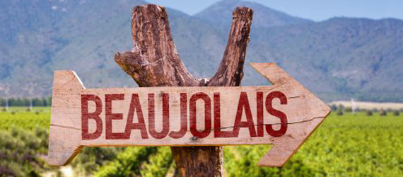 Apologia del Gamay